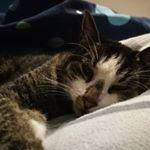 @dobine_und_emma Profile Image | Linktree