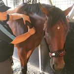 @equinemusclematters Profile Image | Linktree