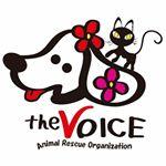@animalrescue_the_voice Profile Image | Linktree