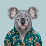 @queensland Profile Image   Linktree